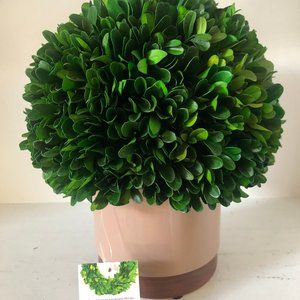 Ball Boxwood Topiary in Beige Ceramic Pottery